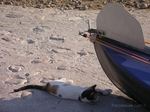 Cats & sea kayaking